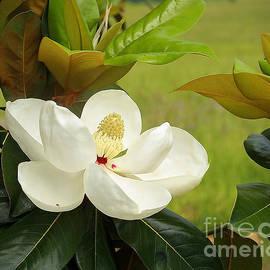 Teresa Dunlap - Southern Magnolia