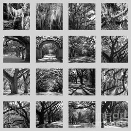 Carol Groenen - Southern Trees - Black and White and Gray