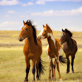 Jerry Cowart - Southwest Wild Horses On Navajo Indian Reservation