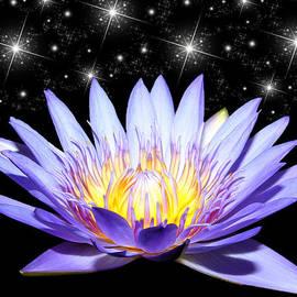 Judy Vincent - Sparkling Blue Wonder