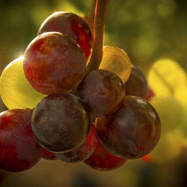Jean Noren - Sparkling Grape Cluster