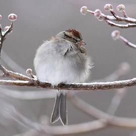 Travis Truelove - Sparrow - Bird - Snug as a Bug