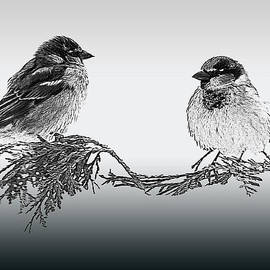 Jayne Gohr - Sparrow Digital Art