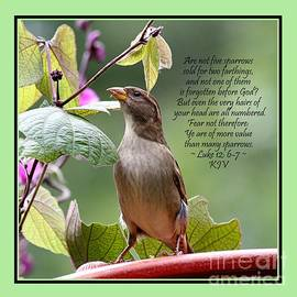Catherine Sherman - Sparrow Inspiration from the Book of Luke