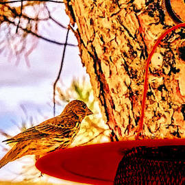 Bob and Nadine Johnston - Sparrow Pine Tree Feeder