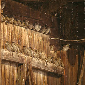 Attila Simon - Sparrows in the rain