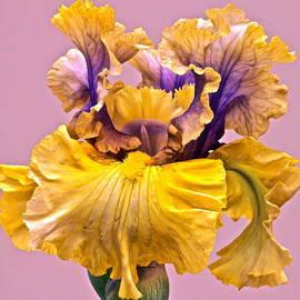 Byron Varvarigos - Spectacular Iris Close Up