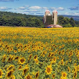 Regina Geoghan - Spectacular Sunflowers