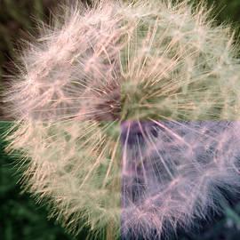 Tina M Wenger - Spiced Up Dandelion
