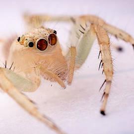 Vijay Sonar - Spider king
