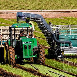 Robert Bales - Spinach Harvest