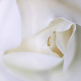 Jennie Marie Schell - Spirit White Rose Flower Macro
