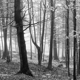 Shelle Ettelson - Spirited Forest