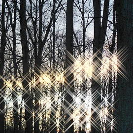 Sharon Costa - Spirits in the Woods