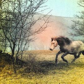 Patricia Keller - Spiritus Equus
