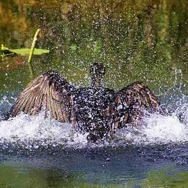 Chuck  Hicks - Splash