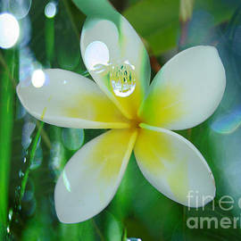 Beverly Guilliams - Splash of Plumeria