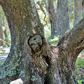 Cynthia Guinn - Spooky Face In A Tree