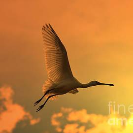 Hermanus A Alberts - Spoonbill Stork Golden Flight