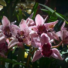 Carla Parris - Spray of Mauve Orchids