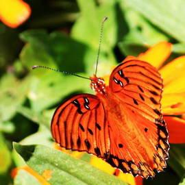 Dorothy Menera - Spread Your Wings