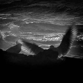 Dale Stillman - Spreading My Wings.
