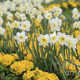 Tracy  Hall - Spring Ahead