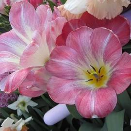 MTBobbins Photography - Spring Beauty