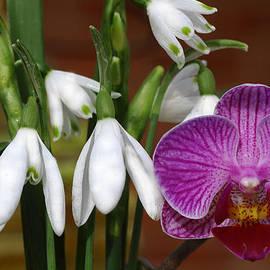 Rumyana Whitcher - Spring Beauty