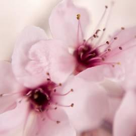 Timothy Bischoff - Spring Blooms 0174