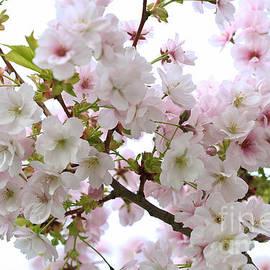 Tracy  Hall - Spring Blossom