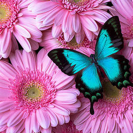 Garry Gay - Spring Blue Butterfly