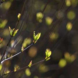 Christina Rollo - Spring Bokeh
