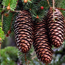 Lori Pessin Lafargue - Spring Christmas Tree