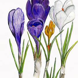 Wendy Le Ber - Spring Crocus Flowers