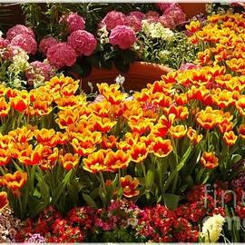 Kathleen Struckle - Spring Delight