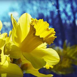 Mary Zeman - Spring Dreams