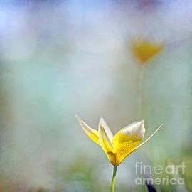 Uma Wirth - Spring echoes