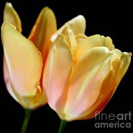 Carol Komassa - Spring Fling