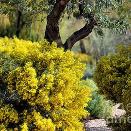 Deb Halloran - Spring Flora