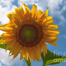 Dale Powell - Spring Flower Power