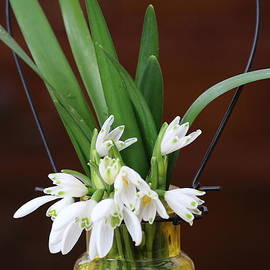 Rumyana Whitcher - Spring Flowers Bouquet
