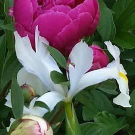 Charlotte Gray - Spring Flowers