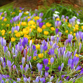 Rumyana Whitcher - Spring Flowers