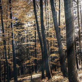 Bruno Santoro - Spring Forest