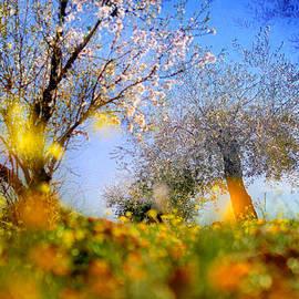 Guido Montanes Castillo - Spring forest