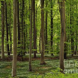 Inge Riis McDonald - Spring Forest