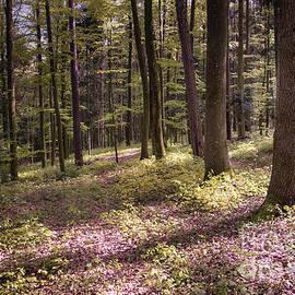 Bruno Santoro - Spring Forest2