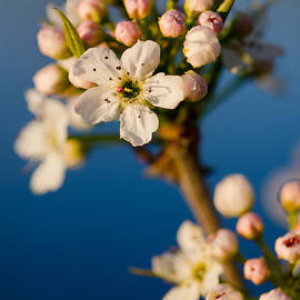 Nick  Boren - Spring Forth
