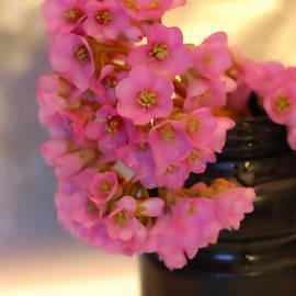 Guido Strambio - Spring gift